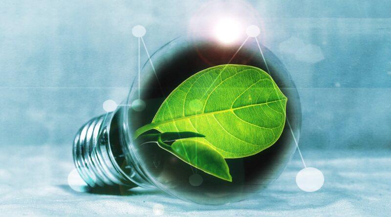 Image of leaf in a lightbulb to symbolise innovation